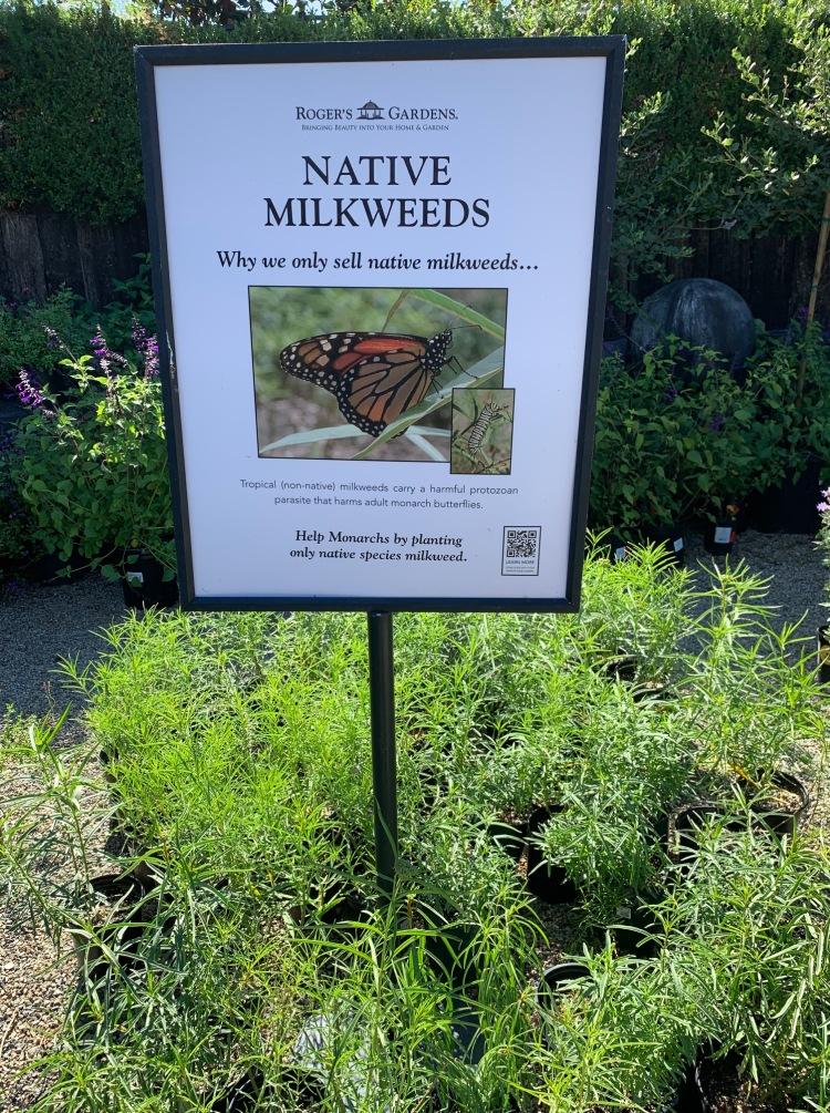 Why Native Milkweed